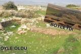 boyle (1)