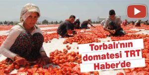 Torbalı'nın domatesi TRT Haber'de