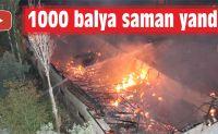 1000 BALYA SAMAN YANDI