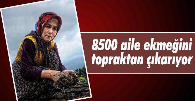 8500 aile ekmeğini  topraktan çıkarıyor