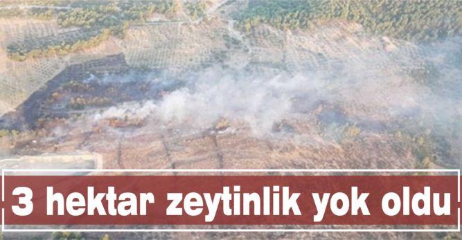 3 hektar zeytinlik yok oldu