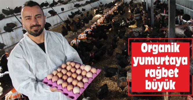 Organik yumurtaya rağbet büyük