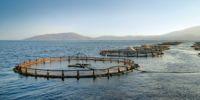 Türkiye kültür balığında ihracat rekoru kırdı