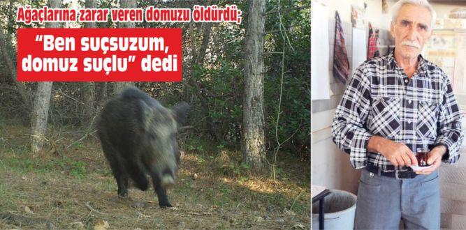 """Ağaçlarına zarar veren domuzu öldürdü, """"Ben suçsuzum, domuz suçlu"""" dedi"""