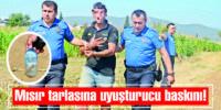 POLİS TARLAYA BASKIN YAPTI