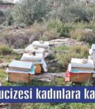 Arıların mucizesi  kadınlara kazanç oldu!