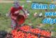 Salçalık domateste rekor kayıp