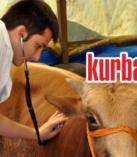 Torbalı'daki çiftliklerde kurbanlık telaşı