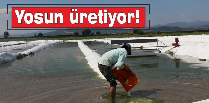 TÜRKİYE'DE BİR İLK: YOSUN İHRACATI!