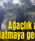 Çobanlara cezai işlem uygulandı