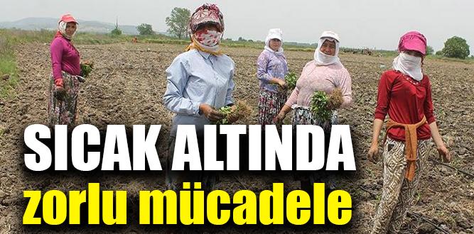Tarım işçileri kavurucu sıcakla mücadele ediyor