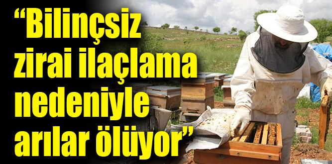 Arı üreticisi yanlış ilaçlamadan dertli
