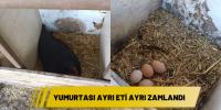 Yumurtası ayrı eti ayrı zamlandı